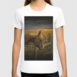 Saddle Horse on the Prairie T-shirt