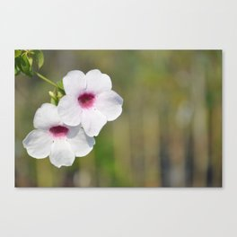 White and Pink Fine Art Photography Canvas Print
