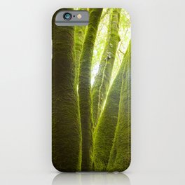 Linden tree trunks, surrounded by humid silent mosses, La Palma island, Spain iPhone Case