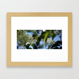 Lace Flower Framed Art Print