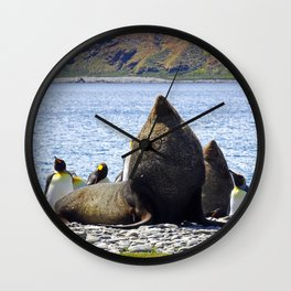 Fur Seal Resting Wall Clock