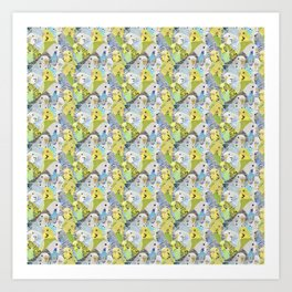 Budgie Parakeets Art Print