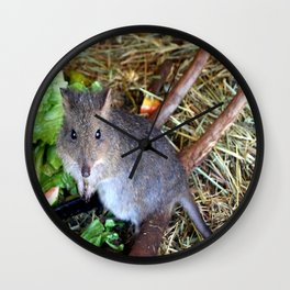 Potoroo Wall Clock