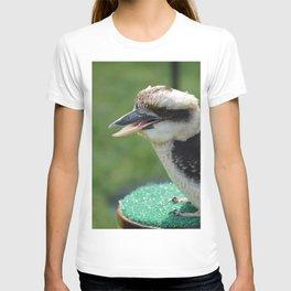 Kookaburra. T-shirt