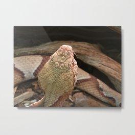Copperhead Snake Metal Print