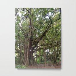 Banyan Beauty Metal Print