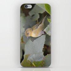 A Female Yellow Warbler iPhone & iPod Skin