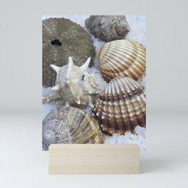Seashells Still Life Mini Art Print