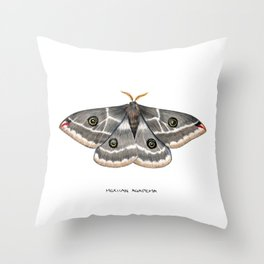 Mexican Agapema  (Agapema anona) Throw Pillow