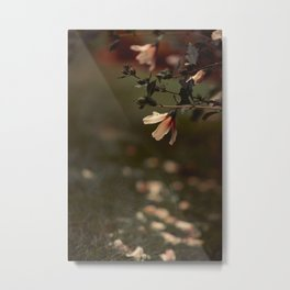 Rose of Sharon Metal Print