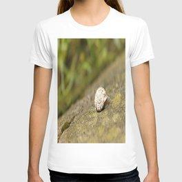 Festina Lente T-shirt