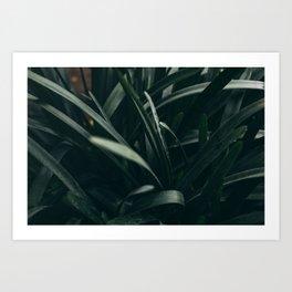 Spanish greens Art Print