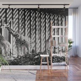 Three giraffes Wall Mural