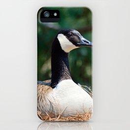 Nesting Canadian Goose iPhone Case