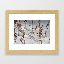 Astilbe Framed Art Print