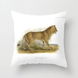 India Mainless Lion Throw Pillow