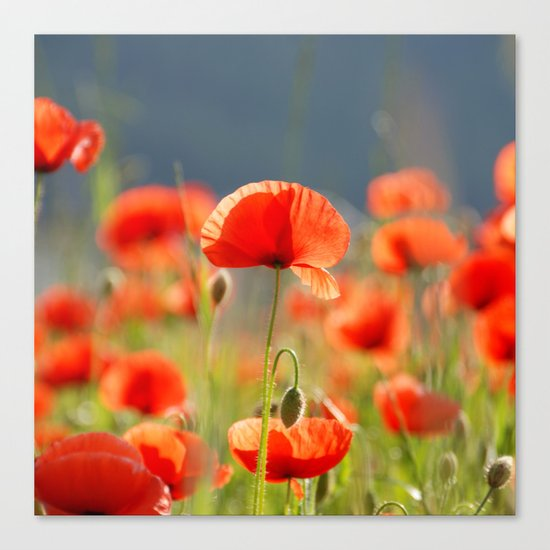 Red Poppies Flowers Canvas Print