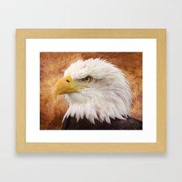 Bald Eagle Portrait Framed Art Print