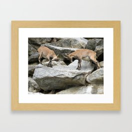 Ibex Framed Art Print