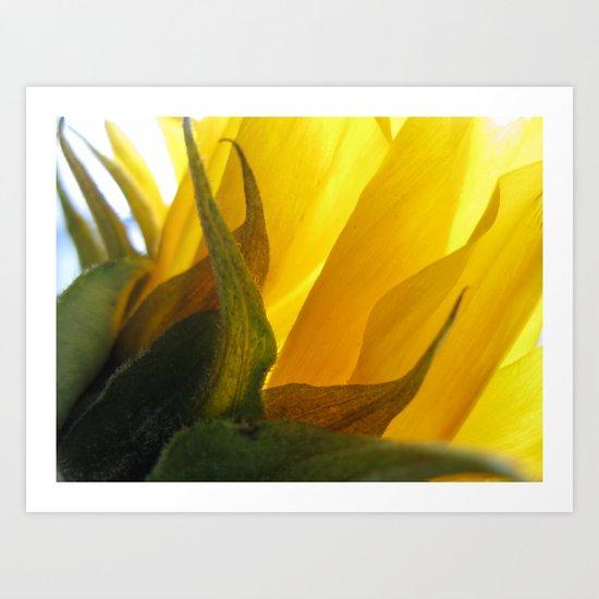Sunflower 47 Art Print