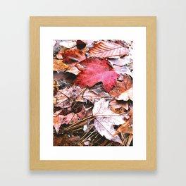 Brisk Autumn  Framed Art Print