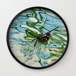 Mallard duckling swimming Wall Clock