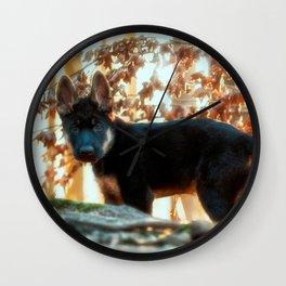 12 weeks old Shepherd puppy Wall Clock