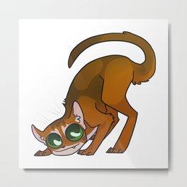 Abyssinian cat Metal Print