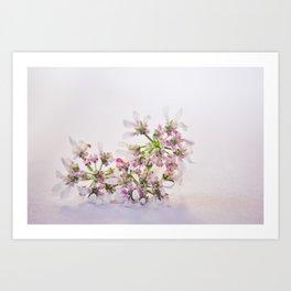 Cilantro flower - Botanical Photography Art Print