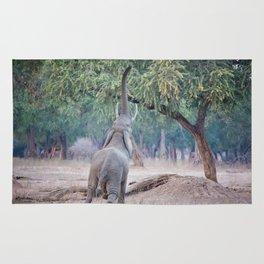Elephant reaching for Acacia tree Rug