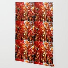 Sun in the Trees Wallpaper