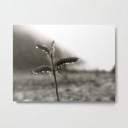 Lupine Seeds at the Glacier Metal Print