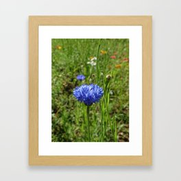 blossom2 Framed Art Print