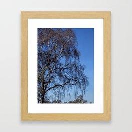 Winter Silver Birch Framed Art Print