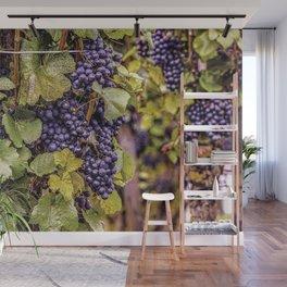 Newport Wine Vineyard and Grapes, Rhode Island Wall Mural
