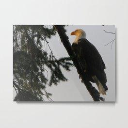 Bald Eagle 14 Metal Print