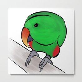 Curious Eclectus Parrot Metal Print