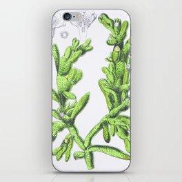 Mesembryanthemum Cryptanthum iPhone Skin