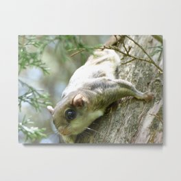flying squirrel 2016 II Metal Print