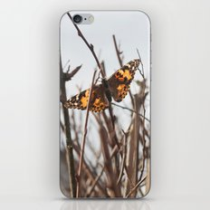 painted lady iPhone & iPod Skin