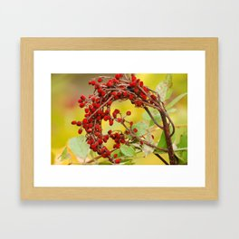 Autumn Berry Framed Art Print