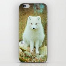 Snow fox iPhone & iPod Skin