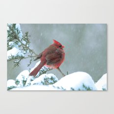 Puffed Cardinal in Snowstorm Canvas Print