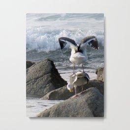 Seagulls Need Better Views Metal Print