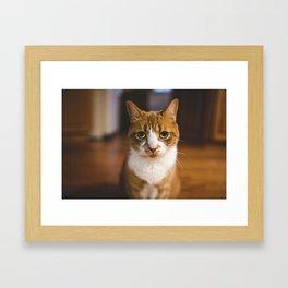 The Cat. Framed Art Print