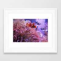 nemo Framed Art Prints featuring Nemo by Joanna Dickinson