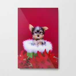 Tiny Yorkshire Terrier Puppy in a Green Basket Surrounded by Christmas Poinsettia Metal Print