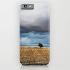 Lonely tree waiting for the storm iPhone 6s Slim Case
