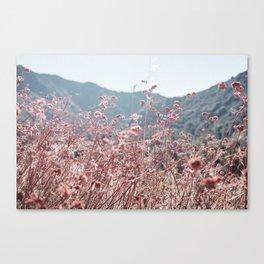 California Pink Flowers Canvas Print