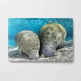 Stand By My Manatee Metal Print